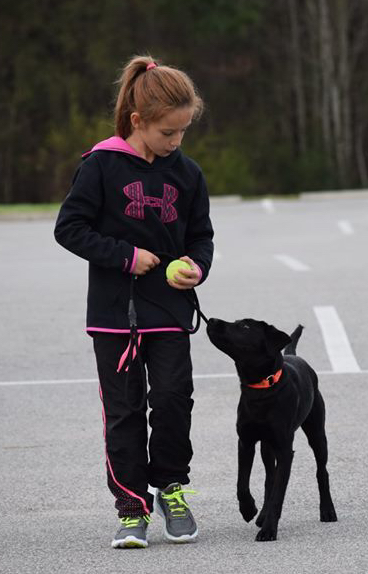 child training dog