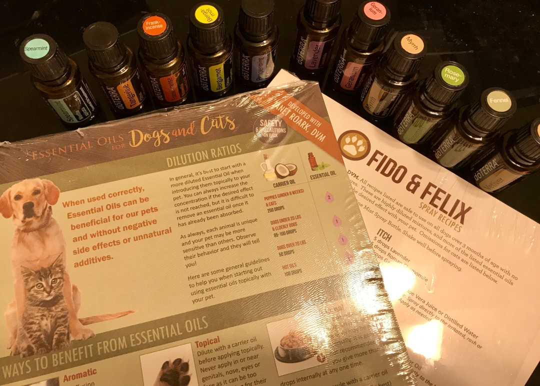 essential oils and your dog class